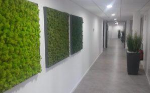 La mousse végétale stabilisée : nouvelle tendance de la décoration