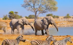 Dépaysement sur le territoire désertique de la Namibie