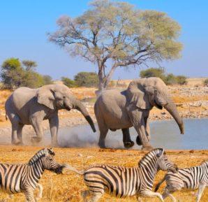 Les animaux en Namibie
